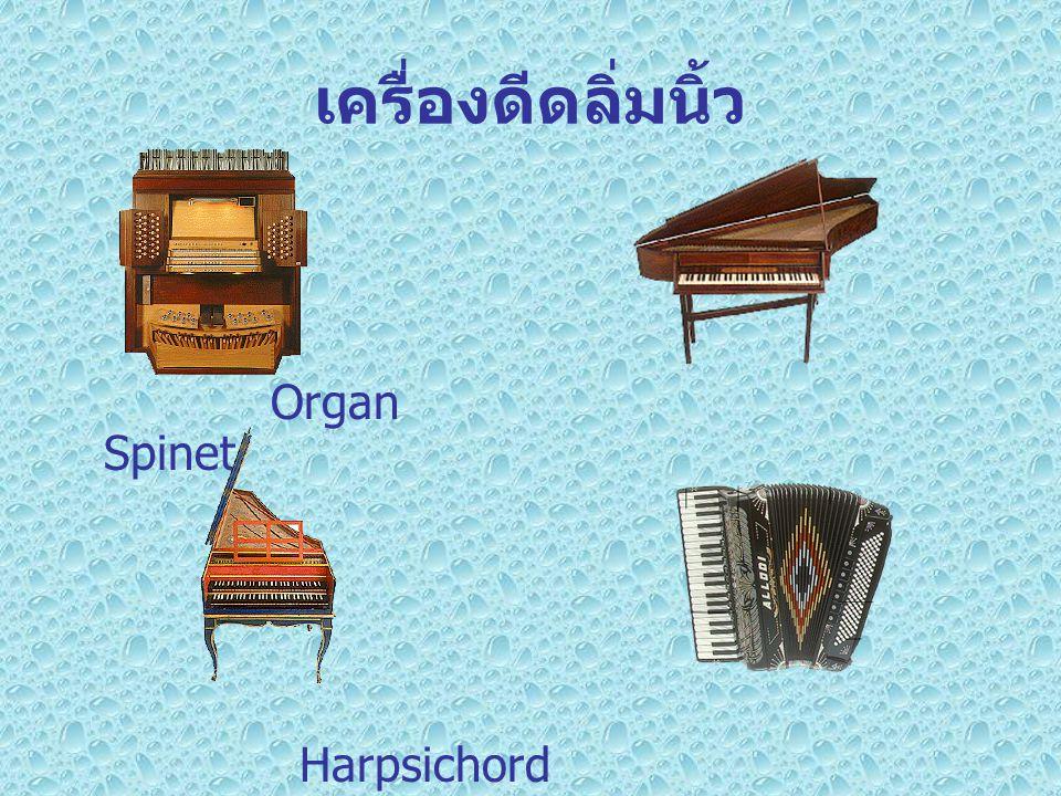 เครื่องดีดลิ่มนิ้ว Organ Spinet Harpsichord Accordion