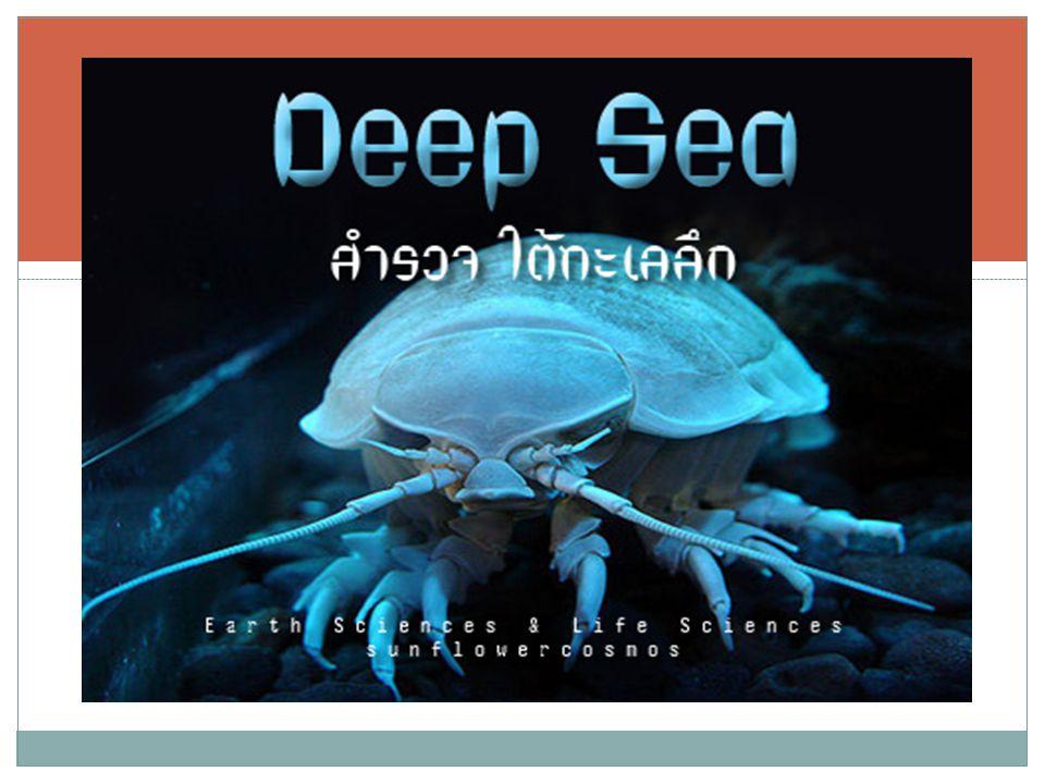 แหล่งที่พบ : Atlantic, Indian, Pacific Ocean ระดับความลึก : +1000 ถึง +4000 เมตร ขนาด : 45 เซนติเมตรขึ้นไป สำหรับเพศ เมีย ชื่อสามัญ : Footballfish ( ปลาลูกฟุตบอล ) ชื่อทางวิทยาศาสตร์ : Himantolophidae