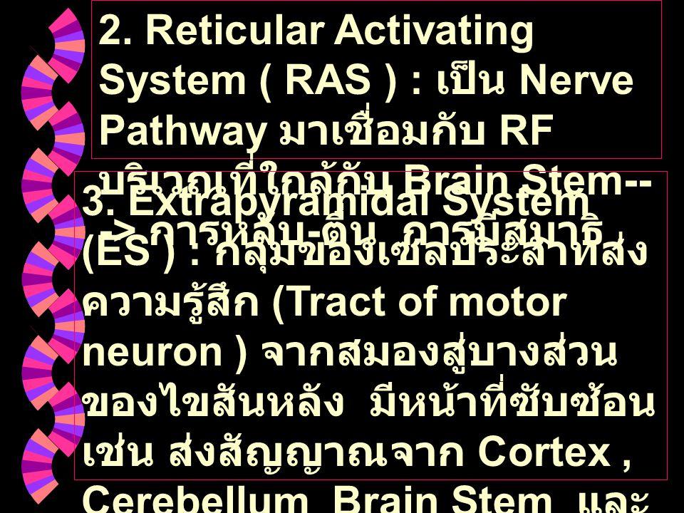 2. Reticular Activating System ( RAS ) : เป็น Nerve Pathway มาเชื่อมกับ RF บริเวณที่ใกล้กับ Brain Stem-- -> การหลับ - ตื่น การมีสมาธิ 3. Extrapyramida