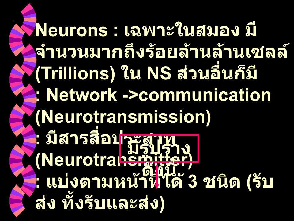 Neurons : เฉพาะในสมอง มี จำนวนมากถึงร้อยล้านล้านเซลล์ (Trillions) ใน NS ส่วนอื่นก็มี : Network ->communication (Neurotransmission) : มีสารสื่อประสาท (