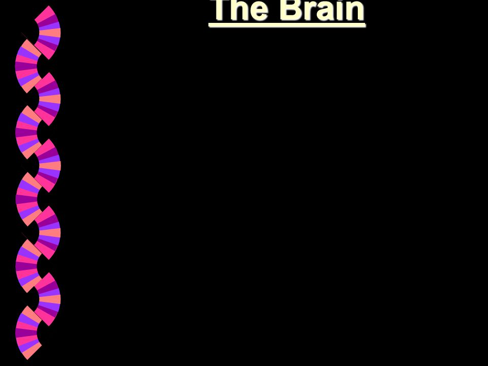 Neurons : เฉพาะในสมอง มี จำนวนมากถึงร้อยล้านล้านเซลล์ (Trillions) ใน NS ส่วนอื่นก็มี : Network ->communication (Neurotransmission) : มีสารสื่อประสาท (Neurotransmitter) : แบ่งตามหน้าที่ได้ 3 ชนิด ( รับ ส่ง ทั้งรับและส่ง ) มีรูปร่าง ดังนี้