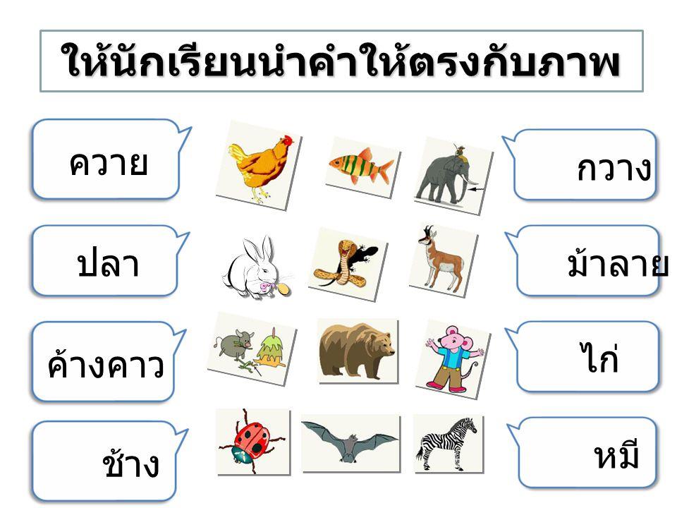 ควาย ช้าง ไก่ กวาง ปลา ค้างคาว หมี ม้าลาย ให้นักเรียนนำคำให้ตรงกับภาพ