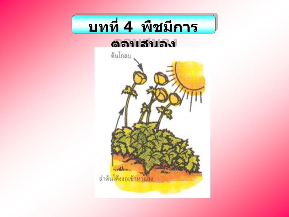 5.พืชมีการตอบสนองต่อสิ่งเร้าต่างๆ เพราะเหตุใด 30 ก.