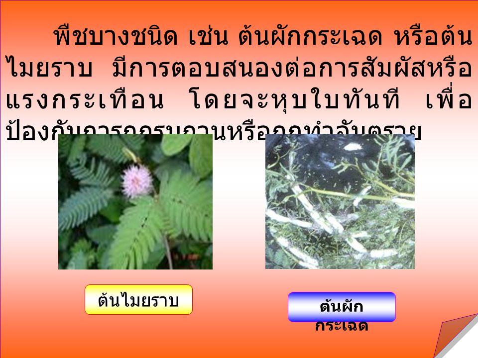 พืชบางชนิด เช่น ต้นผักกระเฉด หรือต้น ไมยราบ มีการตอบสนองต่อการสัมผัสหรือ แรงกระเทือน โดยจะหุบใบทันที เพื่อ ป้องกันการถูกรบกวนหรือถูกทำอันตราย ต้นไมยรา