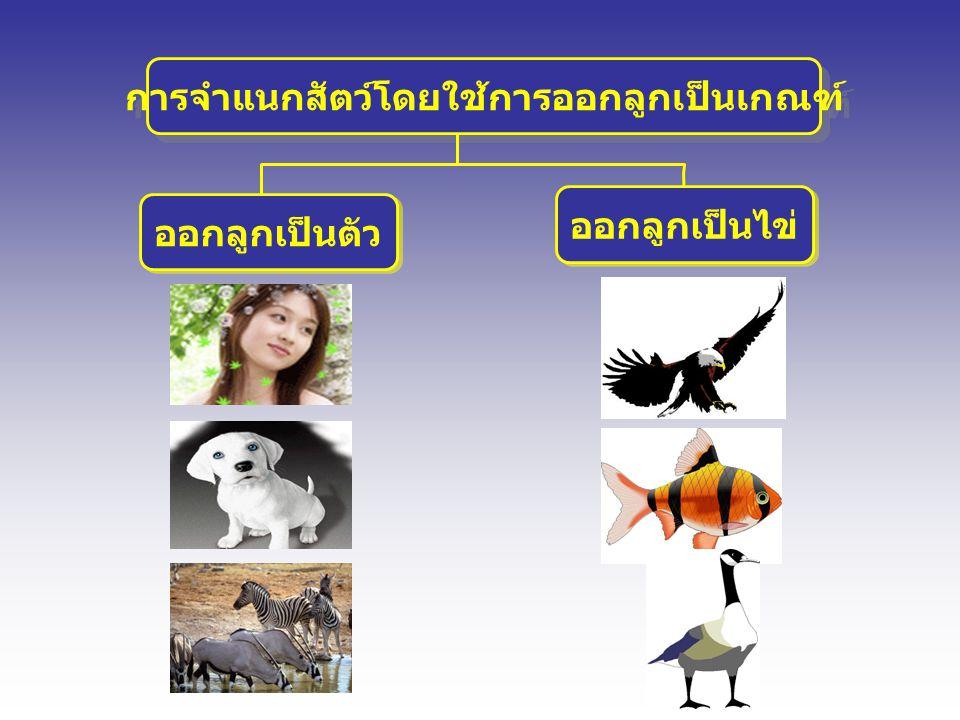 การจำแนกสัตว์โดยใช้การออกลูกเป็นเกณฑ์ ออกลูกเป็นตัว ออกลูกเป็นตัว ออกลูกเป็นไข่ ออกลูกเป็นไข่