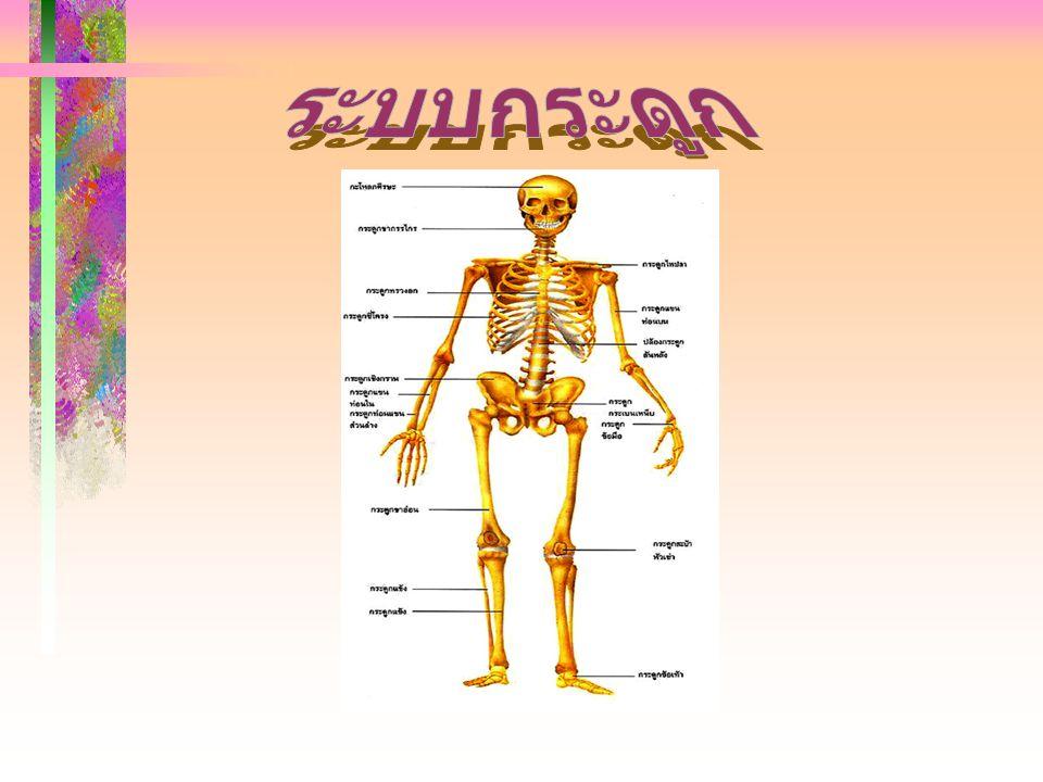 ระบบกระดูก (Skeletal system) กระดูก (Bone ) ในร่างกาย ของคนที่เจริญเติบโตเต็มที่ จะมี จำนวน 206 ชิ้น แบ่งออกเป็น 2 ส่วน กระดูก (Bone ) ในร่างกาย ของคนที่เจริญเติบโตเต็มที่ จะมี จำนวน 206 ชิ้น แบ่งออกเป็น 2 ส่วน 1 กระดูกแกน (Axial skeleton) มีจำนวน 80 ชิ้น 1 กระดูกแกน (Axial skeleton) มีจำนวน 80 ชิ้น เป็นแกนหลักที่ยึดร่างกายเข้า ด้วยกัน เป็นแกนหลักที่ยึดร่างกายเข้า ด้วยกัน ประกอบด้วย ประกอบด้วย