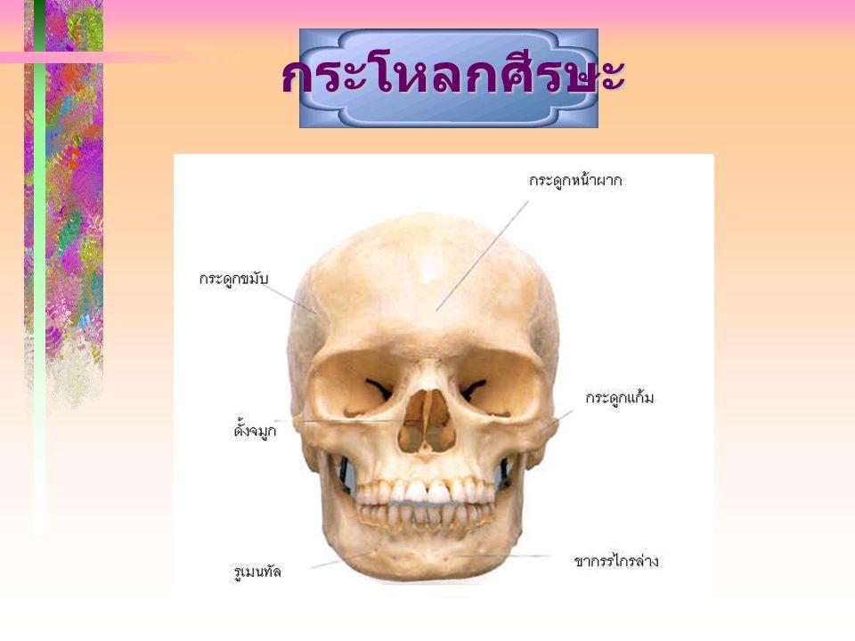 5.ข้อใดไม่ใช่กระดูกแกน (Axial skeleton) 5.