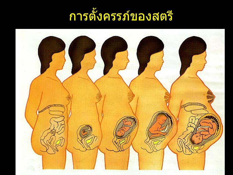 เดือนที่ 1 ระยะนี้สามารถ มองเห็นทารก ( ตัว อ่อน ) ได้ด้วยตาเปล่า ส่วนของสมอง และไข สันหลังจะมีการพัฒนา อย่างเห็นได้ชัด เริ่มมี การสร้างส่วนที่เป็น กระดูกสันหลัง ความ ยาวทารกประมาณ 0.5 ซ.