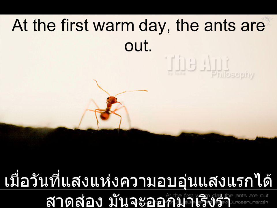 At the first warm day, the ants are out. เมื่อวันที่แสงแห่งความอบอุ่นแสงแรกได้ สาดส่อง มันจะออกมาเริงร่า