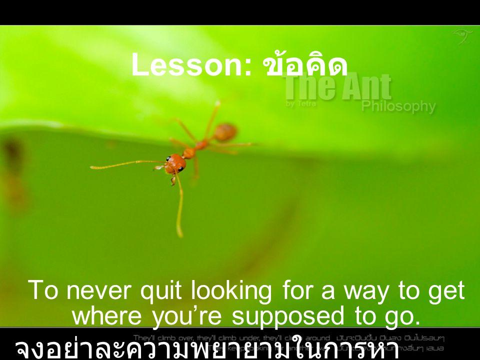 Ants think winter all summer มดคิดถึงฤดูหนาวตลอด ฤดูร้อน