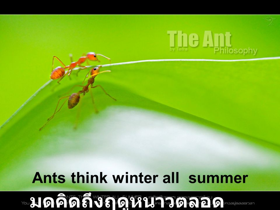 So ants are gathering their winter food in the middle of summer.