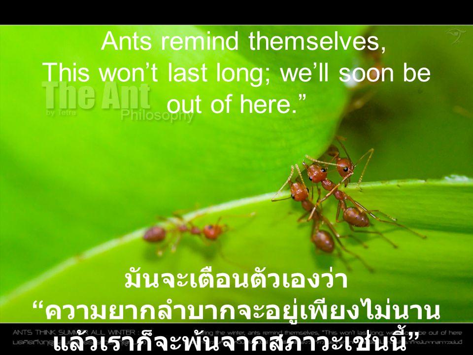 "Ants remind themselves, This won't last long; we'll soon be out of here."" มันจะเตือนตัวเองว่า "" ความยากลำบากจะอยู่เพียงไม่นาน แล้วเราก็จะพ้นจากสภาวะเช"