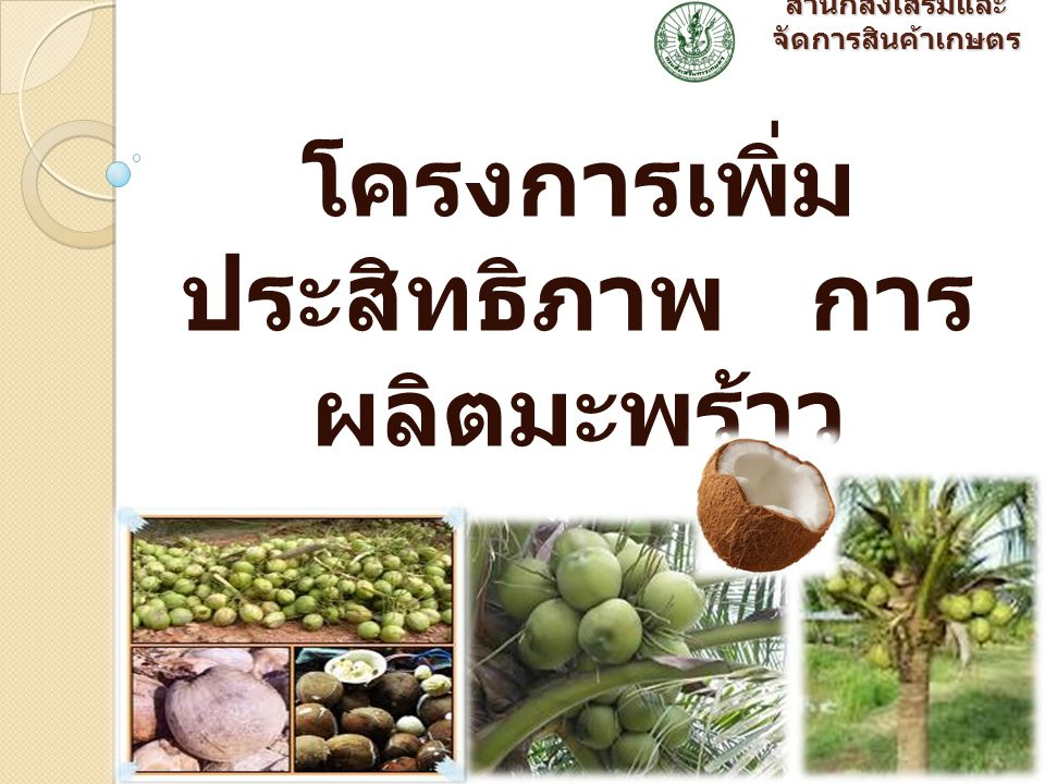 สำนักส่งเสริมและ จัดการสินค้าเกษตร โครงการเพิ่ม ประสิทธิภาพ การ ผลิตมะพร้าว