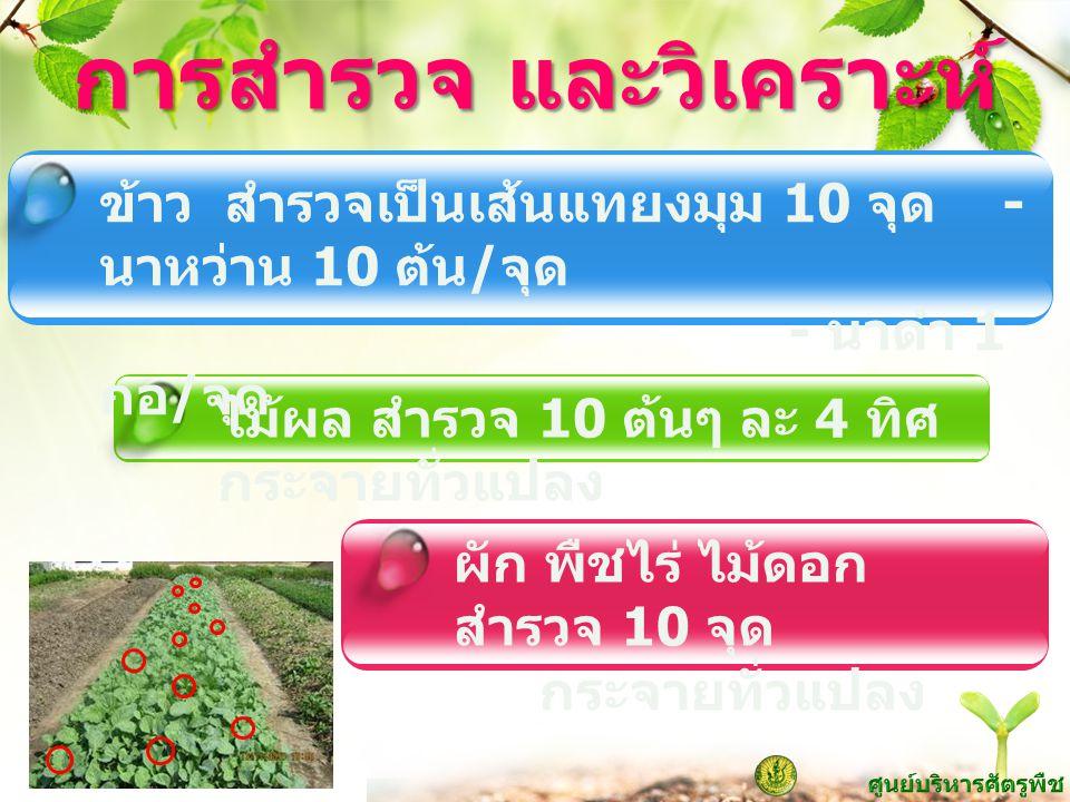 www.themegallery.com การสำรวจ และวิเคราะห์ ข้าว สำรวจเป็นเส้นแทยงมุม 10 จุด - นาหว่าน 10 ต้น / จุด - นาดำ 1 กอ / จุด ผัก พืชไร่ ไม้ดอก สำรวจ 10 จุด กร