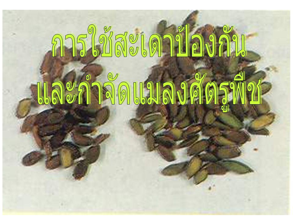 ส่วนของสะเดาที่นำมาใช้ ประโยชน์ ใบ ลำต้น ผล สะเดา เมล็ด สะเดา
