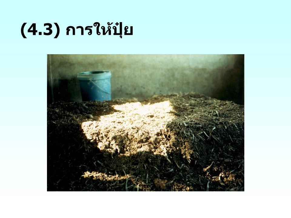 (4.3) การให้ปุ๋ย