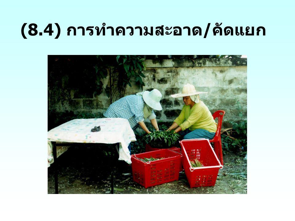 (8.4) การทำความสะอาด / คัดแยก