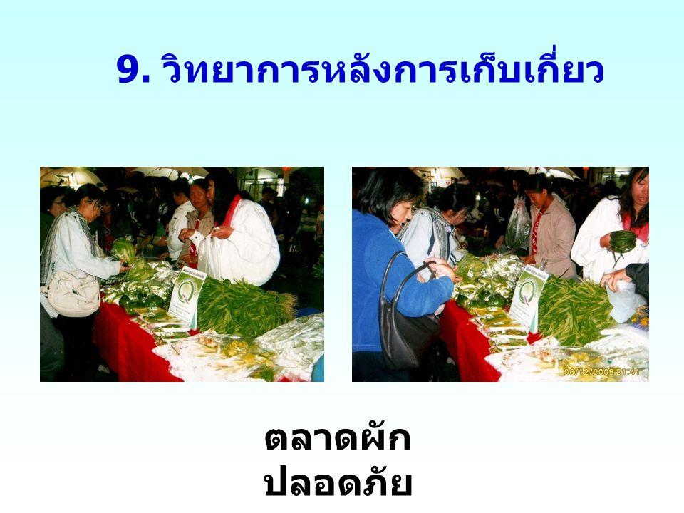 9. วิทยาการหลังการเก็บเกี่ยว ตลาดผัก ปลอดภัย