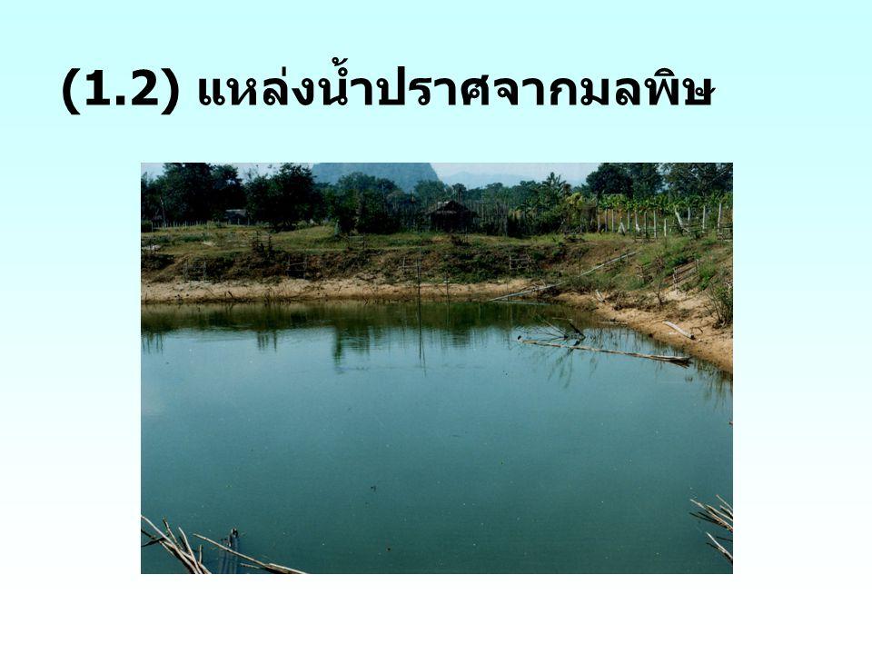 2. พันธุ์ ผักกวางตุ้ง หัวผักกาด