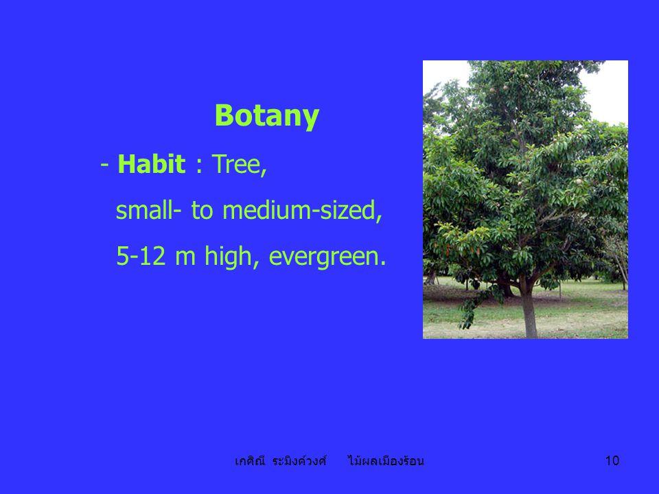 เกศิณี ระมิงค์วงศ์ ไม้ผลเมืองร้อน 10 Botany - Habit : Tree, small- to medium-sized, 5-12 m high, evergreen.
