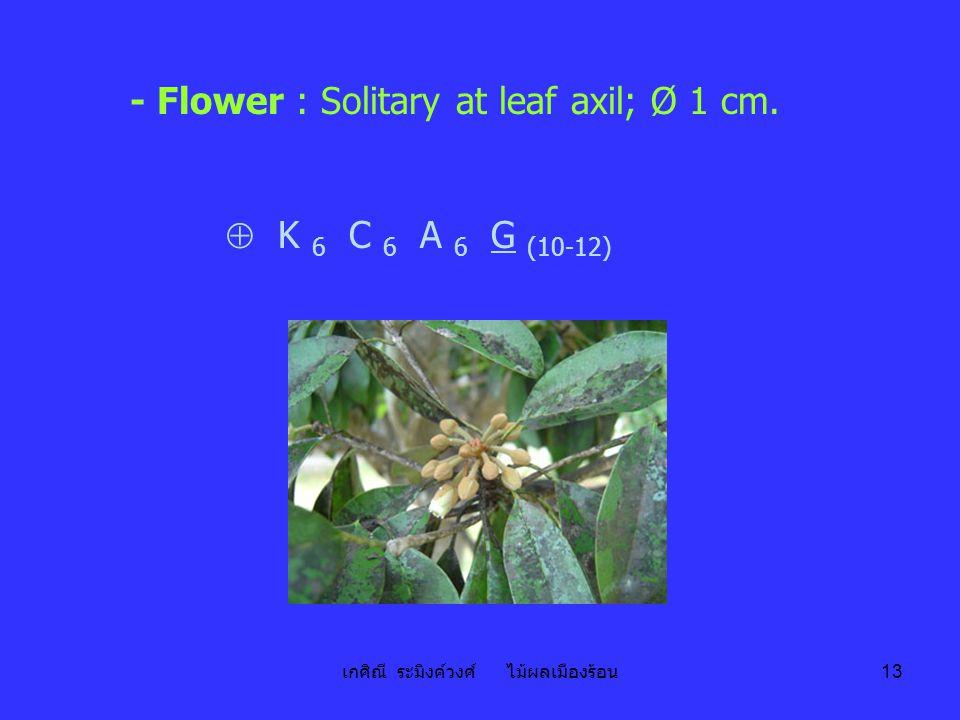 เกศิณี ระมิงค์วงศ์ ไม้ผลเมืองร้อน 13 - Flower : Solitary at leaf axil; Ø 1 cm.  K 6 C 6 A 6 G (10-12)