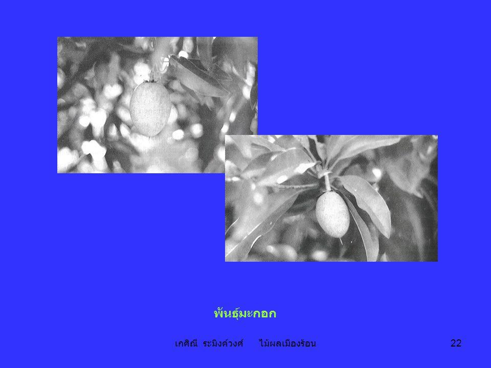 เกศิณี ระมิงค์วงศ์ ไม้ผลเมืองร้อน 22 พันธุ์มะกอก
