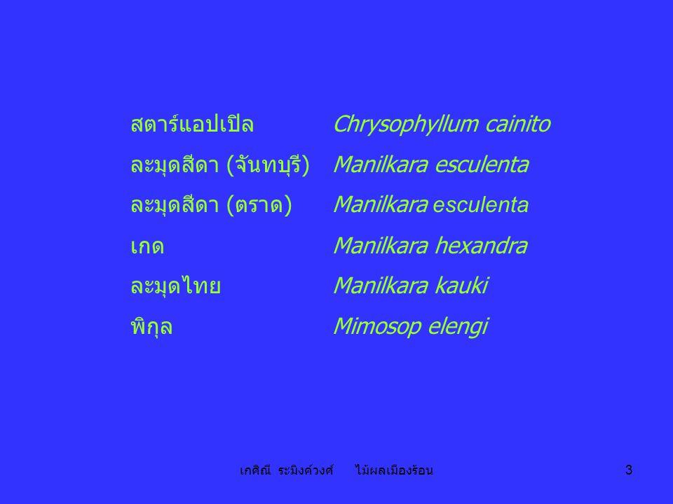 เกศิณี ระมิงค์วงศ์ ไม้ผลเมืองร้อน 3 สตาร์แอปเปิล Chrysophyllum cainito ละมุดสีดา (จันทบุรี)Manilkara esculenta ละมุดสีดา (ตราด)Manilkara esculenta เกด