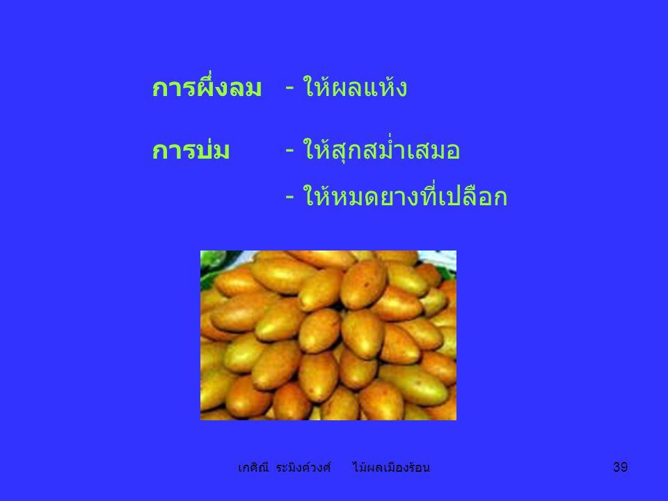 เกศิณี ระมิงค์วงศ์ ไม้ผลเมืองร้อน 39 การผึ่งลม - ให้ผลแห้ง การบ่ม- ให้สุกสม่ำเสมอ - ให้หมดยางที่เปลือก