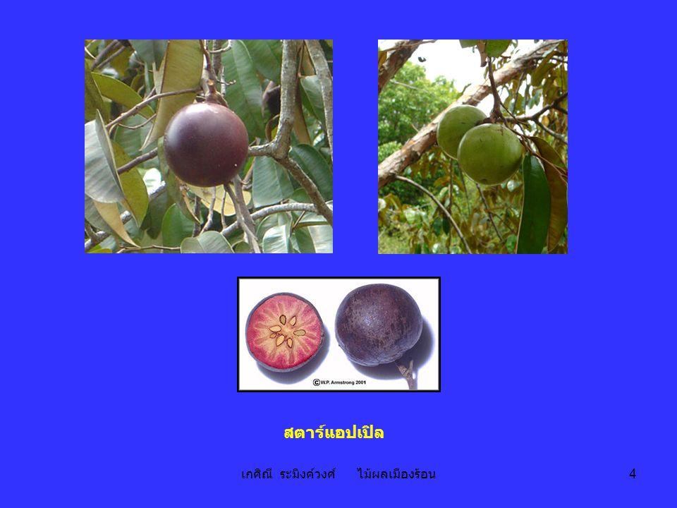 เกศิณี ระมิงค์วงศ์ ไม้ผลเมืองร้อน 4 สตาร์แอปเปิล