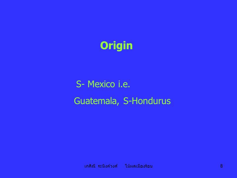เกศิณี ระมิงค์วงศ์ ไม้ผลเมืองร้อน 8 Origin S- Mexico i.e. Guatemala, S-Hondurus