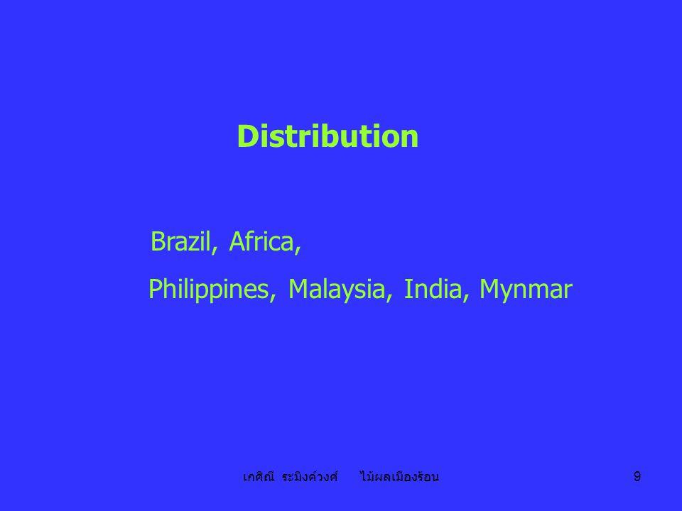 เกศิณี ระมิงค์วงศ์ ไม้ผลเมืองร้อน 9 Distribution Brazil, Africa, Philippines, Malaysia, India, Mynmar