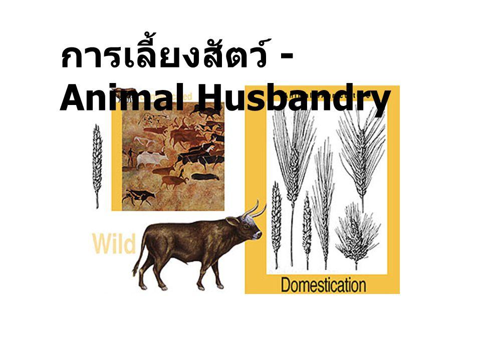 สุนัขบ้าน สุนัขป่าเอเซีย (The asiatic wolf) น่าจะ เป็นสัตว์ป่าพวกแรก ที่มนุษย์นำมาเลี้ยง พบกระดูกสุนัข ปะปนกับร่องรอย มนุษย์ Neolithic humans ซึ่งอายุ ประมาณ 6000 ปี ก่อนคริสตกาล และพบกระดูก โค แกะ และแพะ เช่นกัน