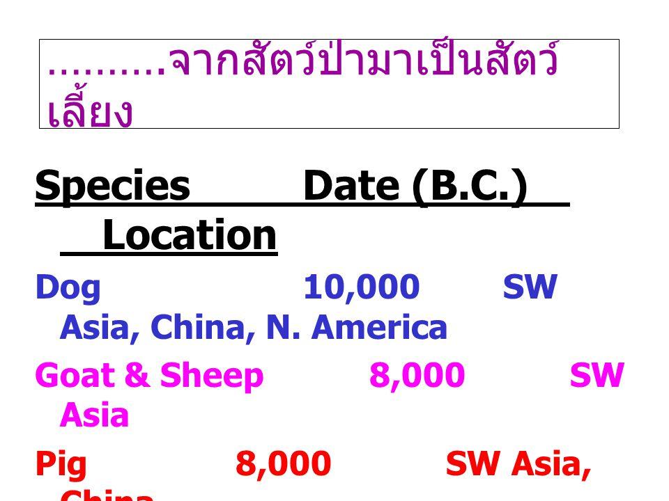 ………. จากสัตว์ป่ามาเป็นสัตว์ เลี้ยง SpeciesDate (B.C.) Location Dog10,000SW Asia, China, N. America Goat & Sheep8,000SW Asia Pig8,000 SW Asia, China Ca