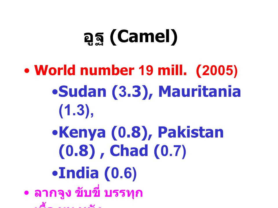 อูฐ (Camel) World number 19 mill.