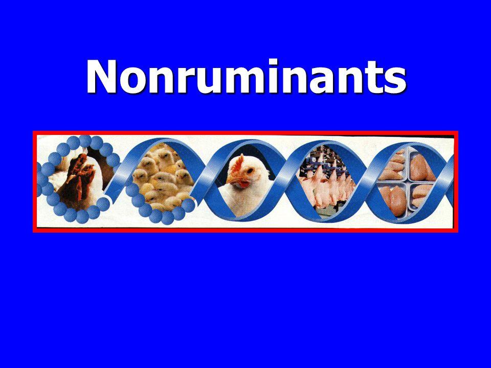 Nonruminants