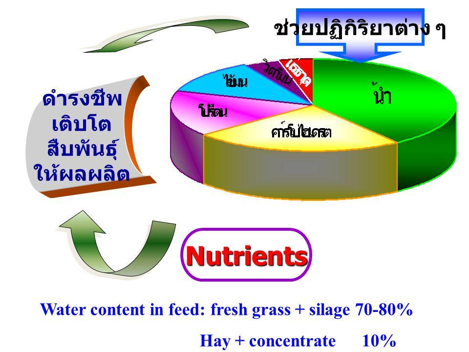 Nutrients ดำรงชีพ เติบโต สืบพันธุ์ ให้ผลผลิต ช่วยปฏิกิริยาต่าง ๆ Water content in feed: fresh grass + silage 70-80% Hay + concentrate 10%