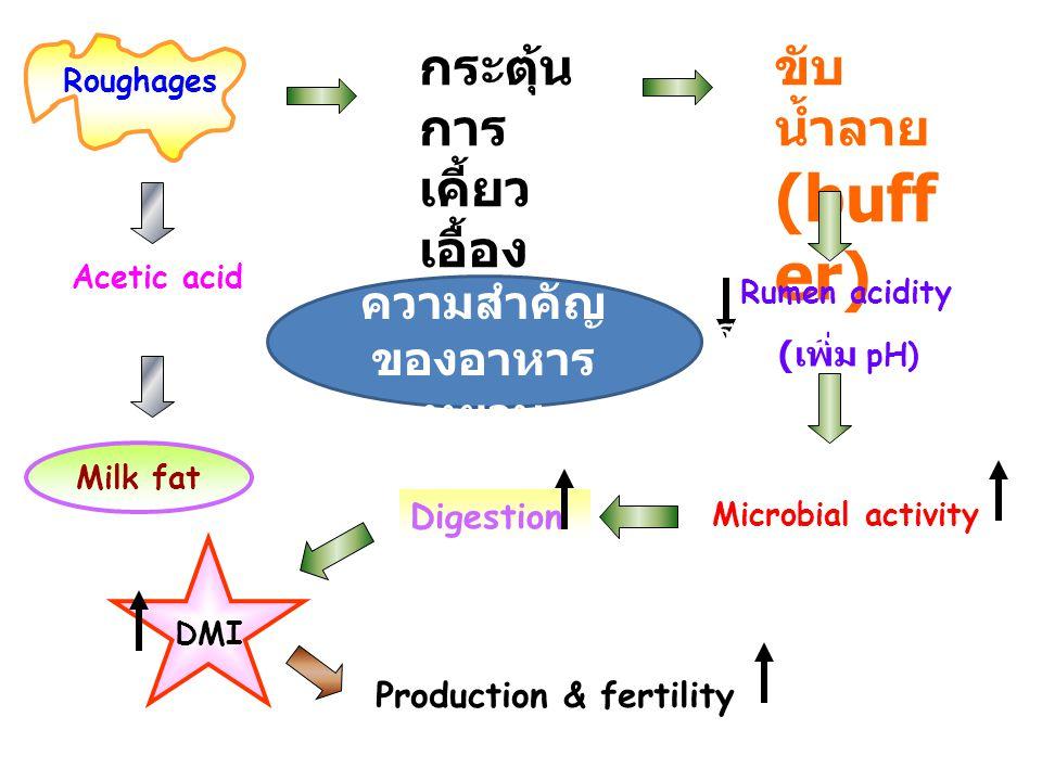Roughages กระตุ้น การ เคี้ยว เอื้อง ขับ น้ำลาย (buff er) Acetic acid Rumen acidity ( เพิ่ม pH) Digestion Production & fertility Microbial activity Mil