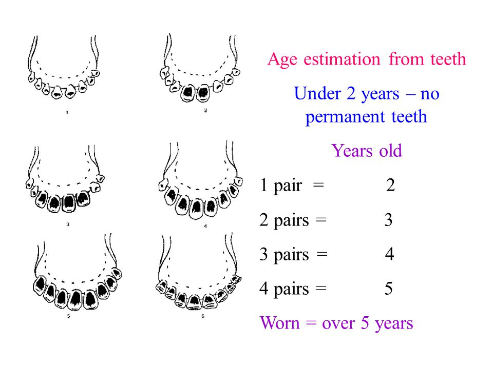 Upper incisor .Intake (consume)………. hours Rumination (….