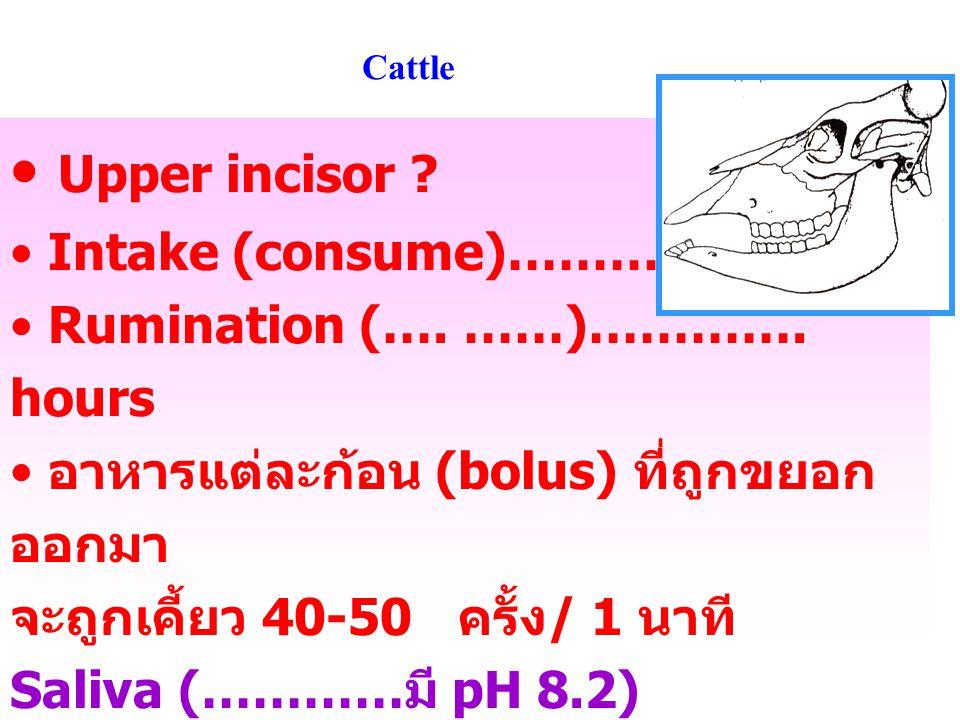 Ruminant saliva * Moistens & rubricates feed – help swallowing *Buffer: high HPO 4 -2 ( ), HCO 3 - ( ) maintain optimum pH – for microbes * Antifoaming prevent bloat *Urea + minerals – useful for microbes (recycle) * ** แต่ไม่มีเอนไซม์เหมือนในสัตว์ กระเพาะเดี่ยวบางชนิด ( ยกเว้นตอนที่เป็นลูกโค )