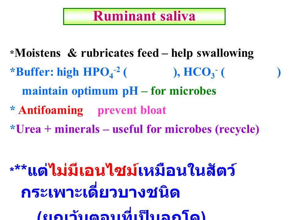 Ruminant saliva * Moistens & rubricates feed – help swallowing *Buffer: high HPO 4 -2 ( ), HCO 3 - ( ) maintain optimum pH – for microbes * Antifoamin