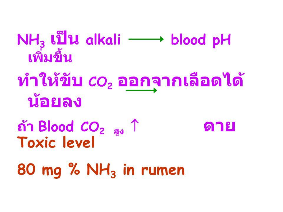 NH 3 เป็น alkali blood pH เพิ่มขึ้น ทำให้ขับ CO 2 ออกจากเลือดได้ น้อยลง ถ้า Blood CO 2 สูง  ตาย Toxic level 80 mg % NH 3 in rumen