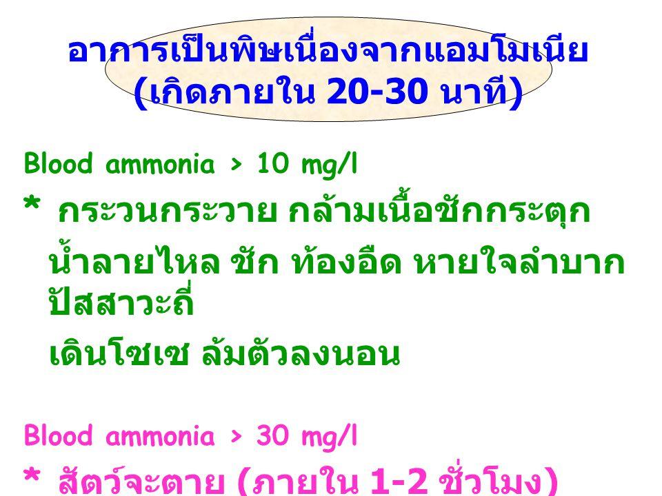 Blood ammonia > 10 mg/l * กระวนกระวาย กล้ามเนื้อชักกระตุก น้ำลายไหล ชัก ท้องอืด หายใจลำบาก ปัสสาวะถี่ เดินโซเซ ล้มตัวลงนอน Blood ammonia > 30 mg/l * ส