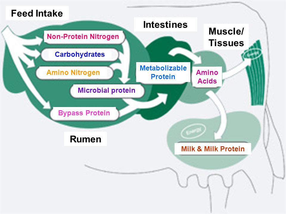 NPN vs natural protein N(%)CP(%)B/kgB/100 g CP Biuret40.7254.4 Urea,fertilizer46.0287.5301.04 Soybean meal7.044.0225.00 Fish meal9.660.0447.33 %CP = % N x …….