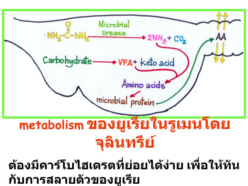 urease H 2 O 2NH 3 + CO 2 2 NH 4 OH Degrade cell wall Urea : water : rice straw = 4–6 : 70 : 100 นำยูเรีย 5 กก ละลายน้ำ 70 ลิตร ราดลงบน ฟาง 100 กก ย่ำให้ทั่ว ทำเป็นชั้นๆ ปิดกองด้วยผ้าพลาสติก ทิ้งไว้ ประมาณ 3 สัปดาห์หรือจนกว่าจะต้องการใช้ เปิดกองให้ ammonia ระเหยสักครู่ก่อนนำมา เลี้ยงโค O NH 2 - C - NH 2 Urea 2H2O2H2O Urea treated rice straw