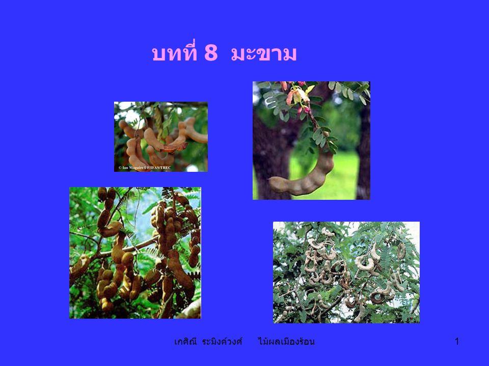 เกศิณี ระมิงค์วงศ์ ไม้ผลเมืองร้อน 1 บทที่ 8 มะขาม
