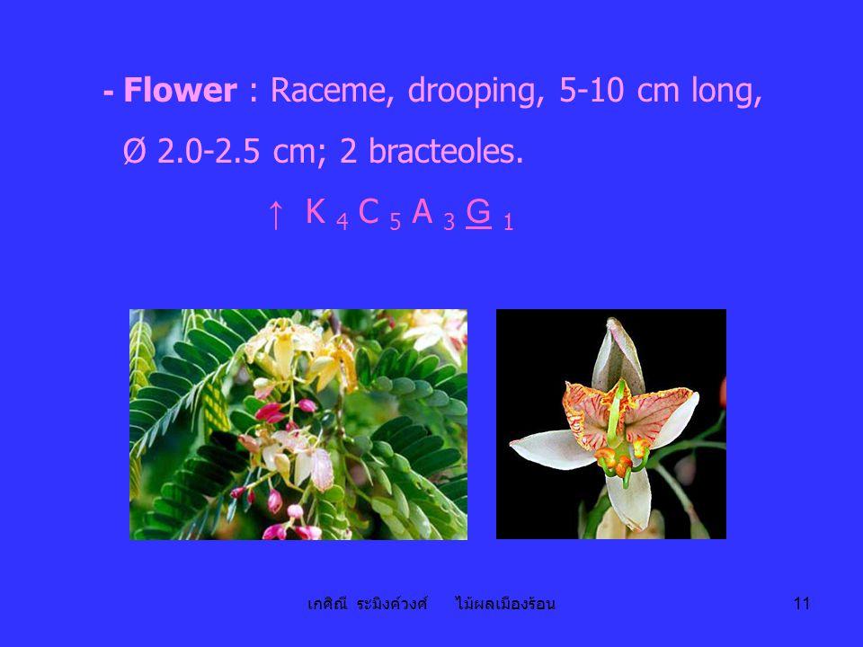 เกศิณี ระมิงค์วงศ์ ไม้ผลเมืองร้อน 11 - Flower : Raceme, drooping, 5-10 cm long, Ø 2.0-2.5 cm; 2 bracteoles. ↑ K 4 C 5 A 3 G 1