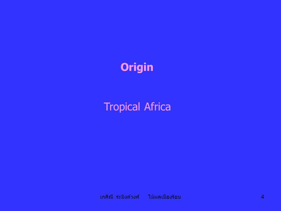 เกศิณี ระมิงค์วงศ์ ไม้ผลเมืองร้อน 4 Origin Tropical Africa