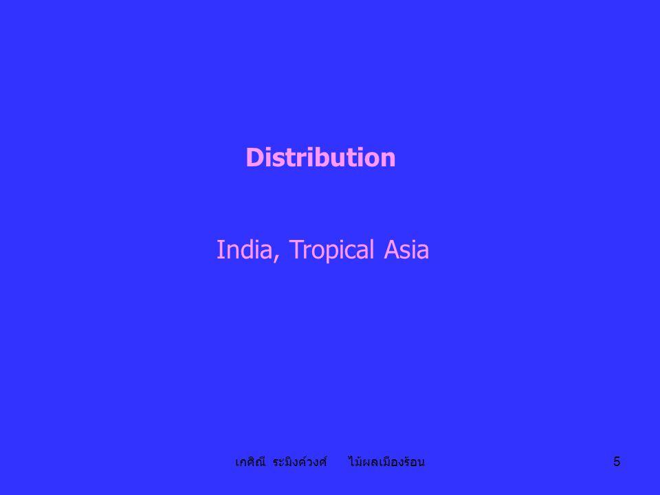 เกศิณี ระมิงค์วงศ์ ไม้ผลเมืองร้อน 5 Distribution India, Tropical Asia