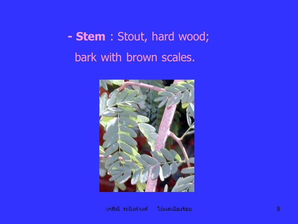 เกศิณี ระมิงค์วงศ์ ไม้ผลเมืองร้อน 9 - Stem : Stout, hard wood; bark with brown scales.