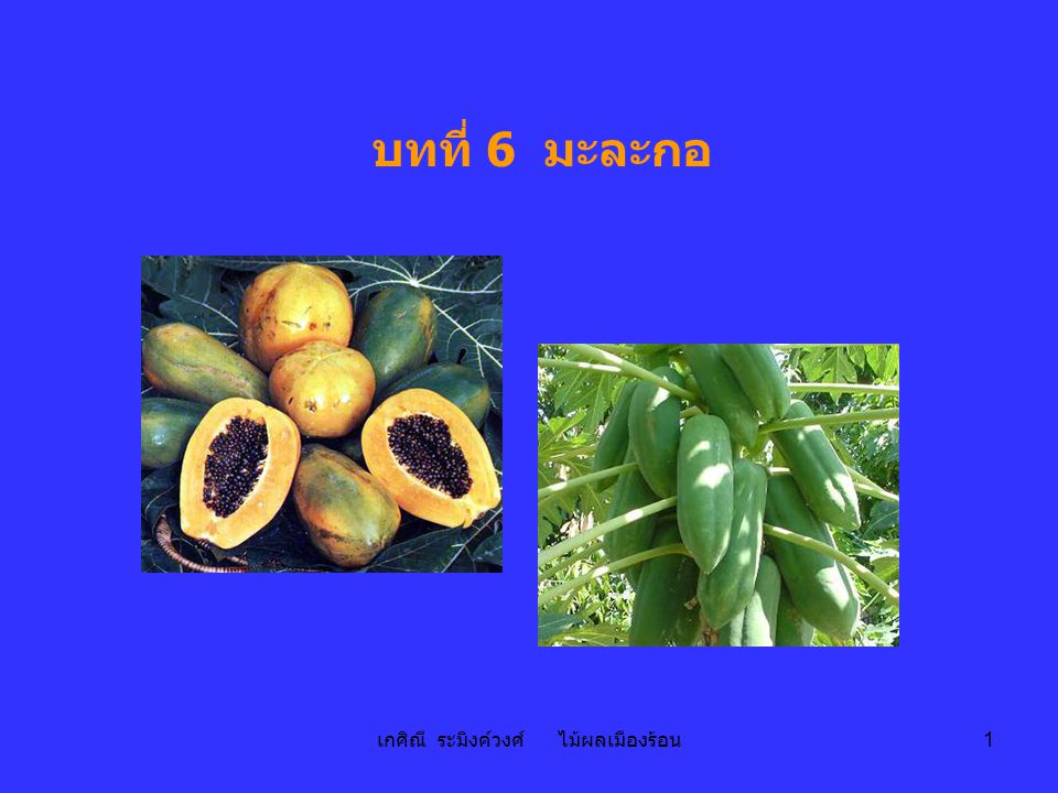 เกศิณี ระมิงค์วงศ์ ไม้ผลเมืองร้อน 2 มะละกอ papaya Carica papaya L.